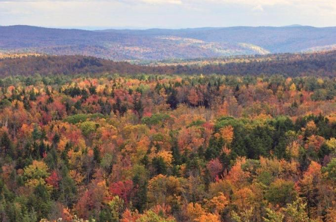 Vermont fall foliage hogback mountain