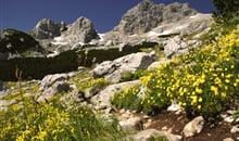 Národní parky a moře Černé Hory za super cenu ** - apartmán