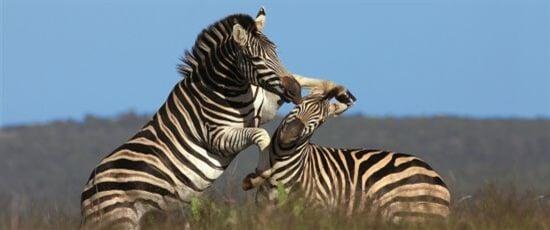 Safari Keňa, Tanzanie, Uganda, Jižní Afrika od 37.160 Kč