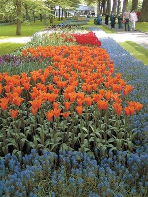 Holandsko kytky