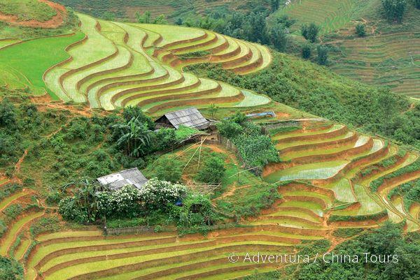 Rýžové terasy u Sapy