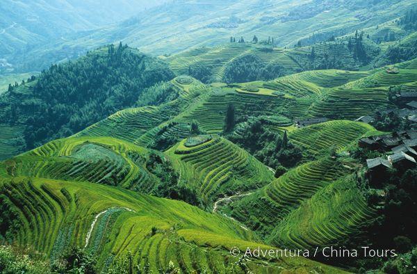 Rýžové terasy Dračí hřbet