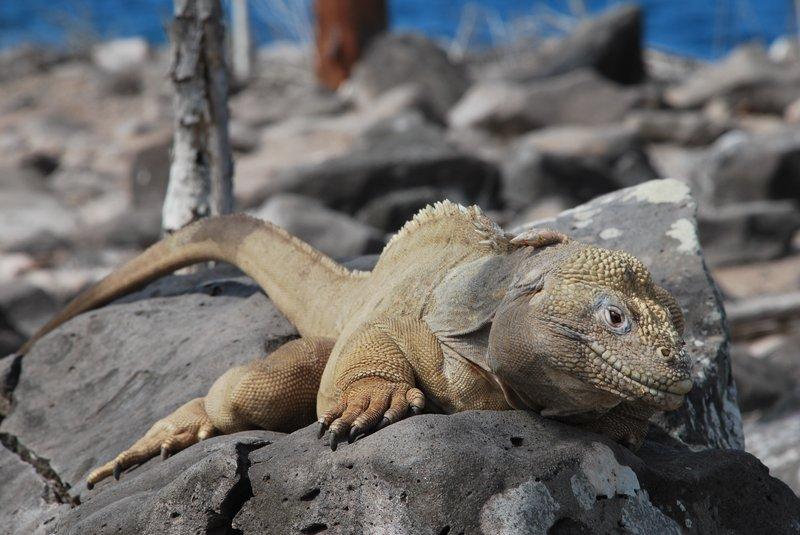 Ekvador-galapagy-04
