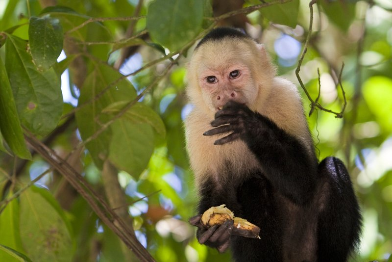 Kostarika-panama-08
