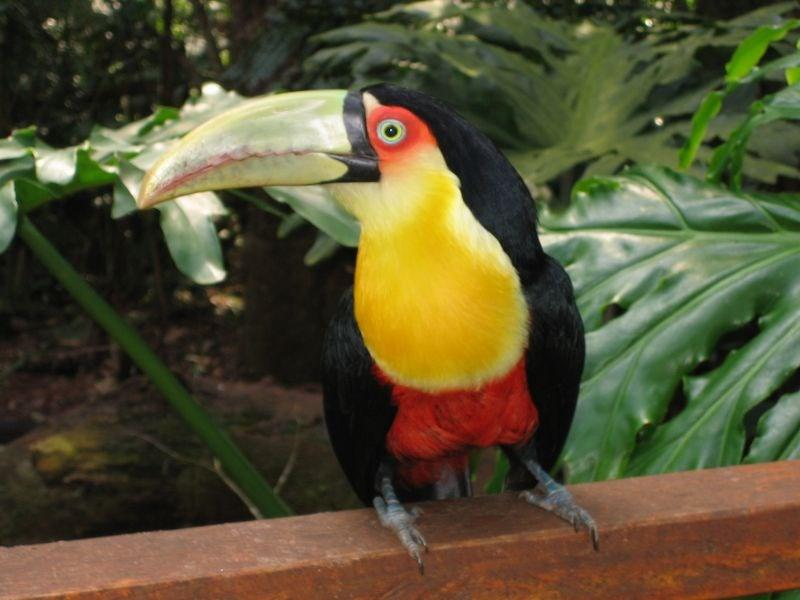 Kostarika-94