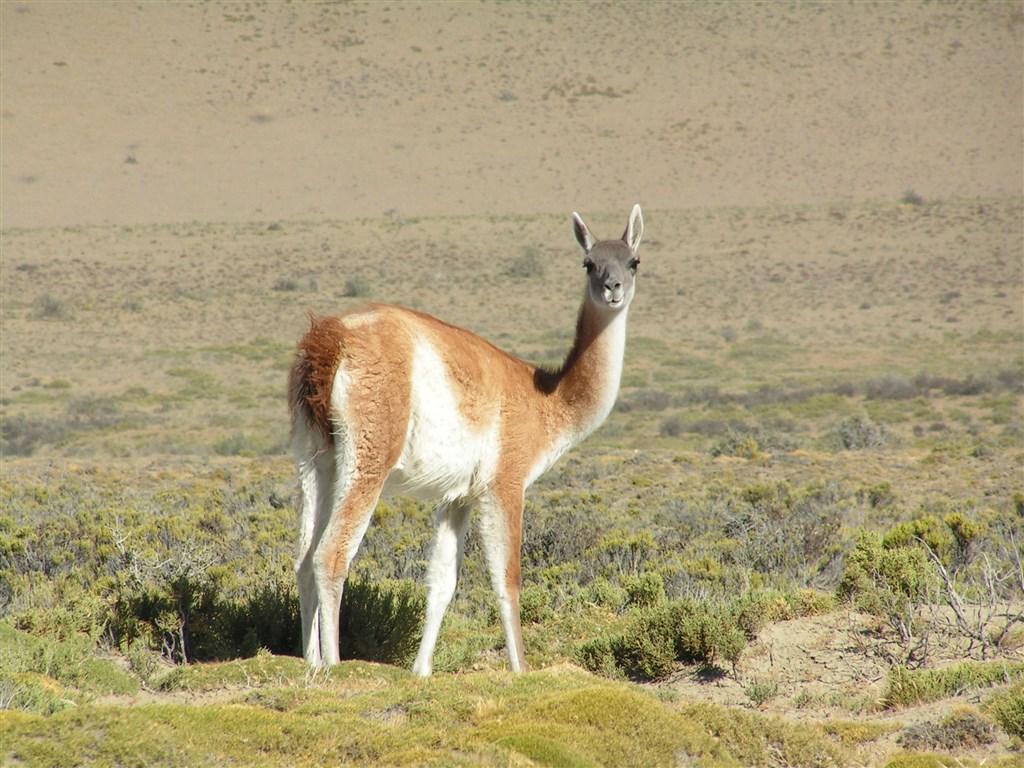 Argentina, Iguacu, Patagonie 110