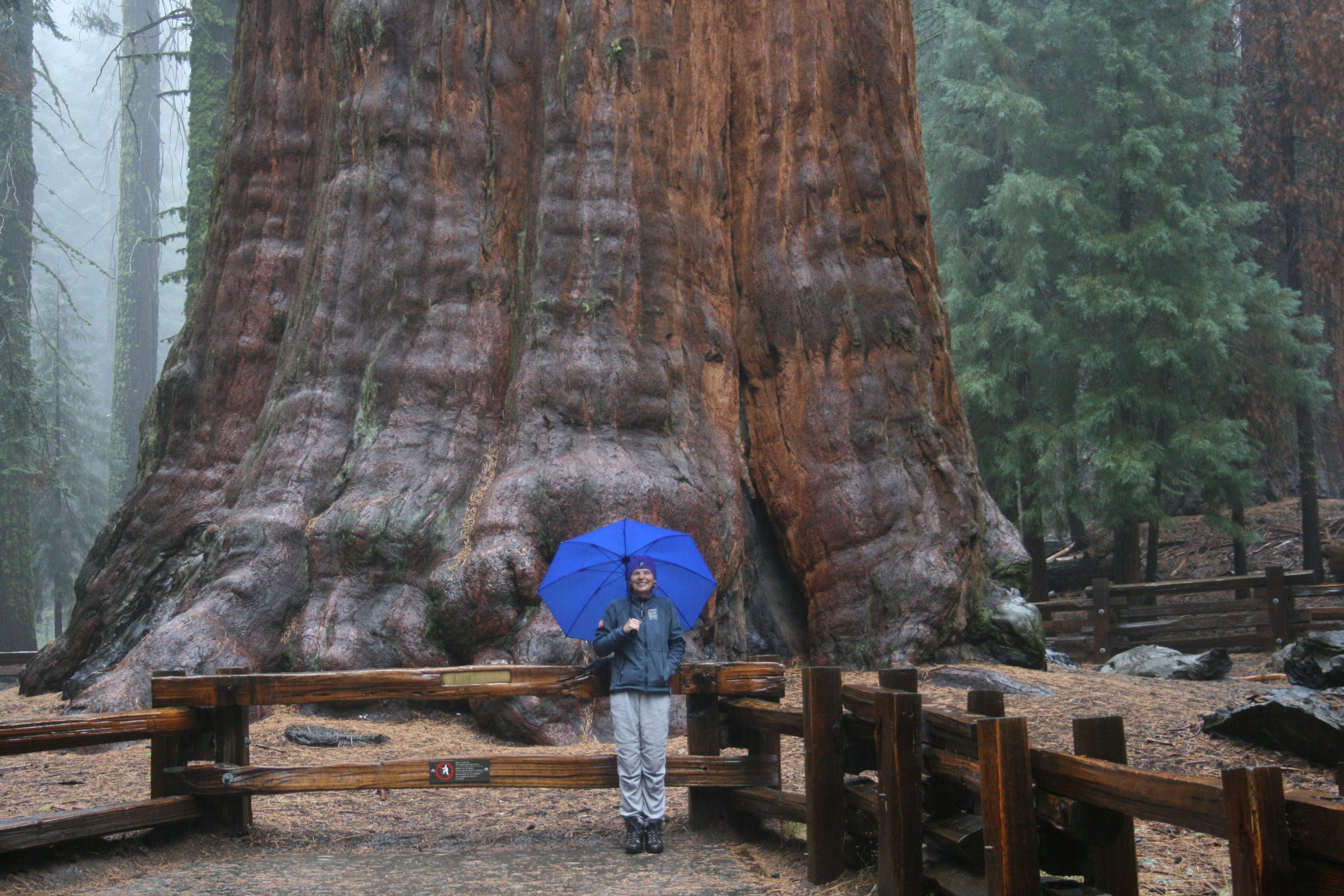 NP Sequoia - General Sherman Tree