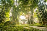 sunshine in the park of Chengdu, China_shutterstock_3824767691