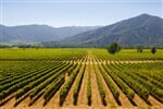 chilean vineyards in late summer in vina del mar, close to the capital santiago de chile_shutterstock_12805600