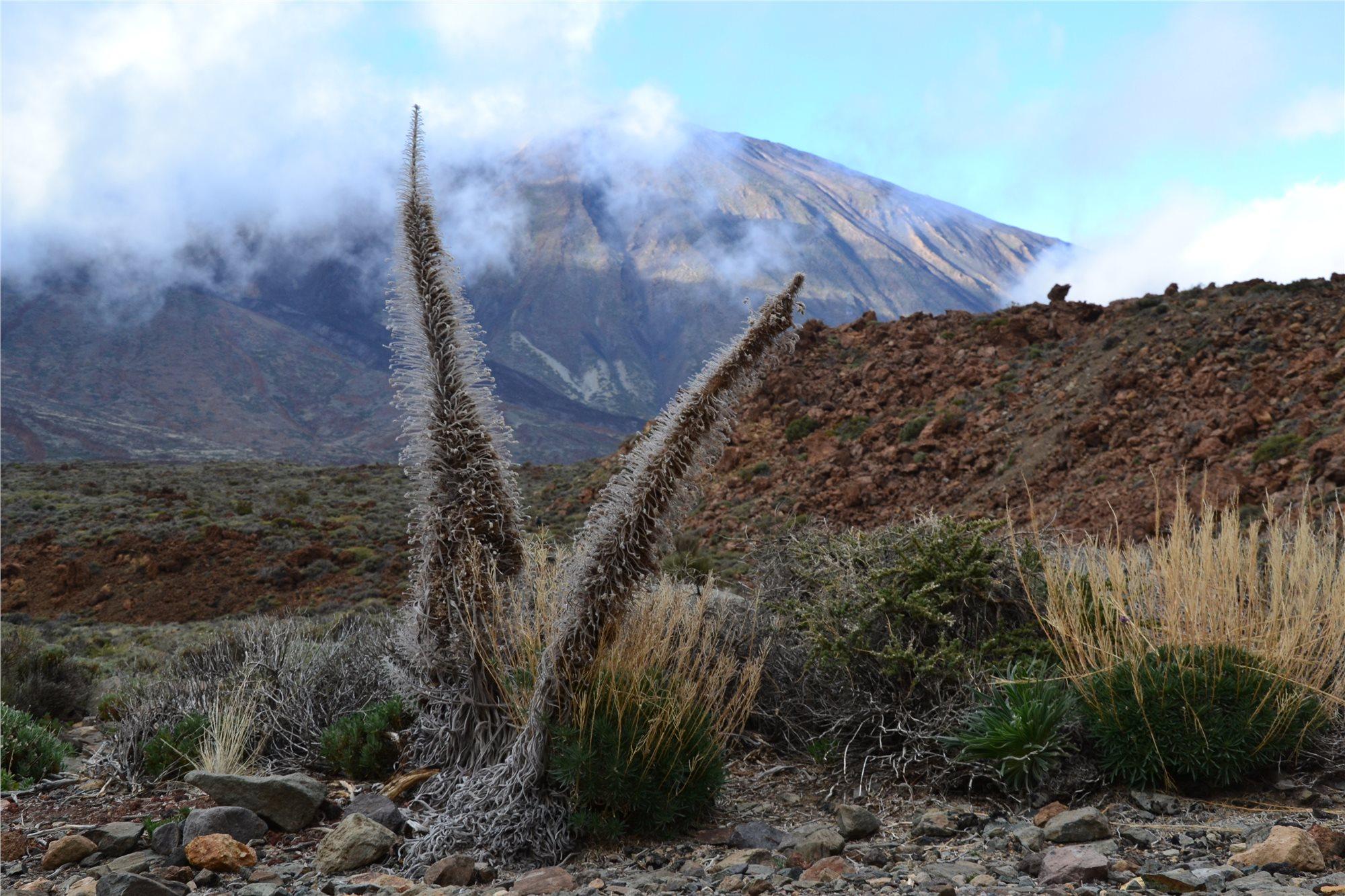 Tenerife © Foto: Marek Jedlička, archiv CK Kudrna