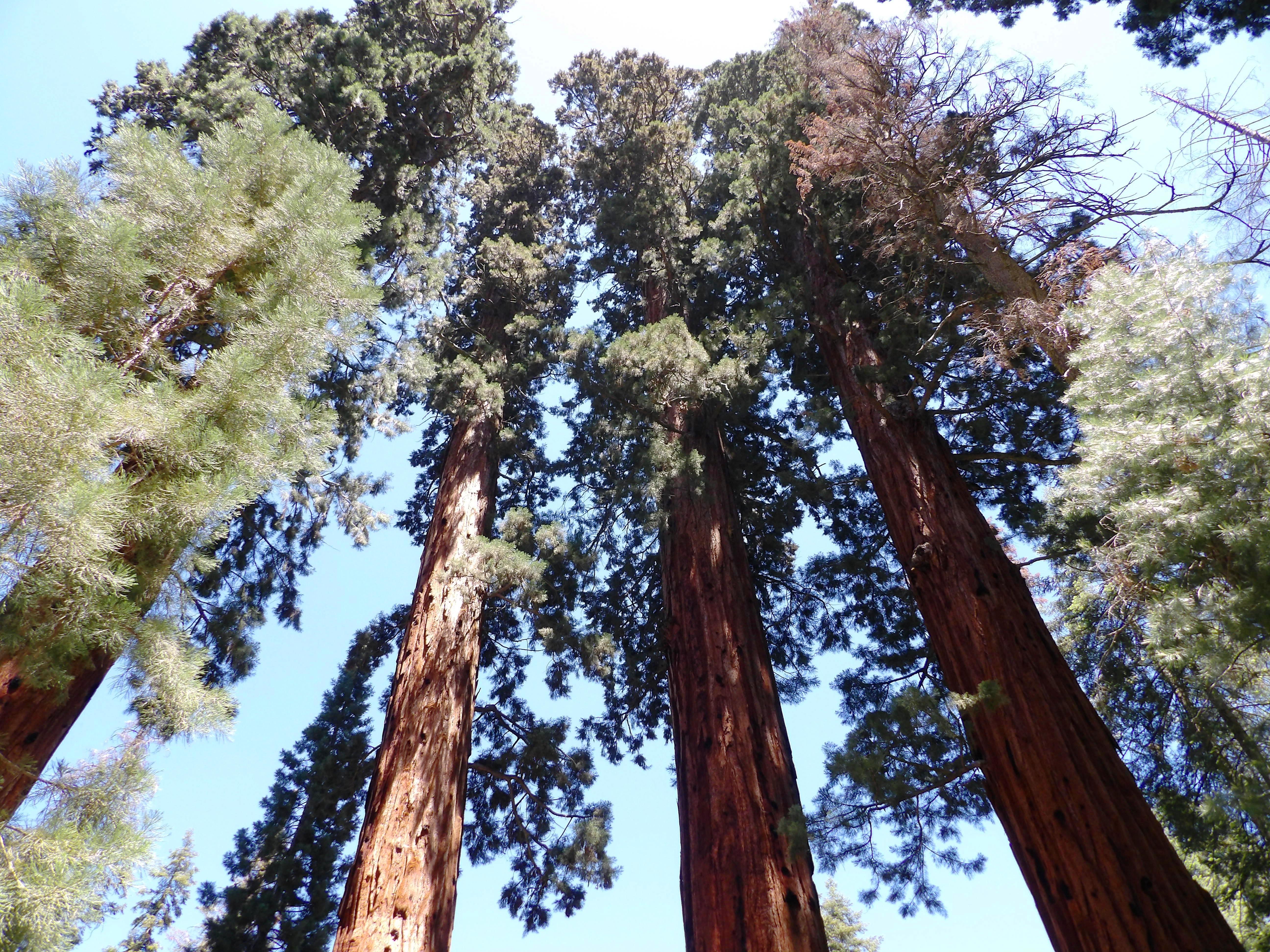 NP Sequoia 1
