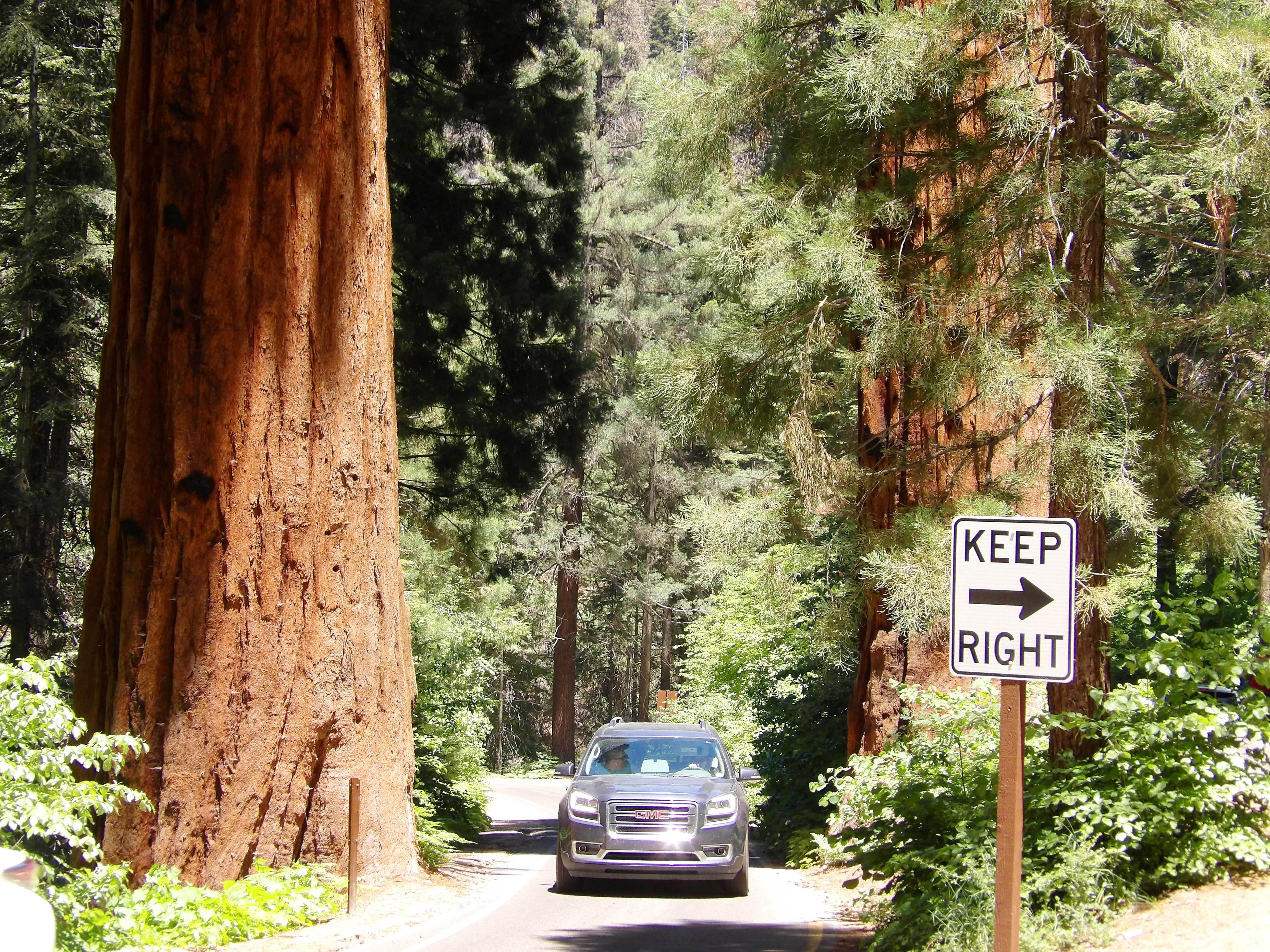 NP Sequoia 2