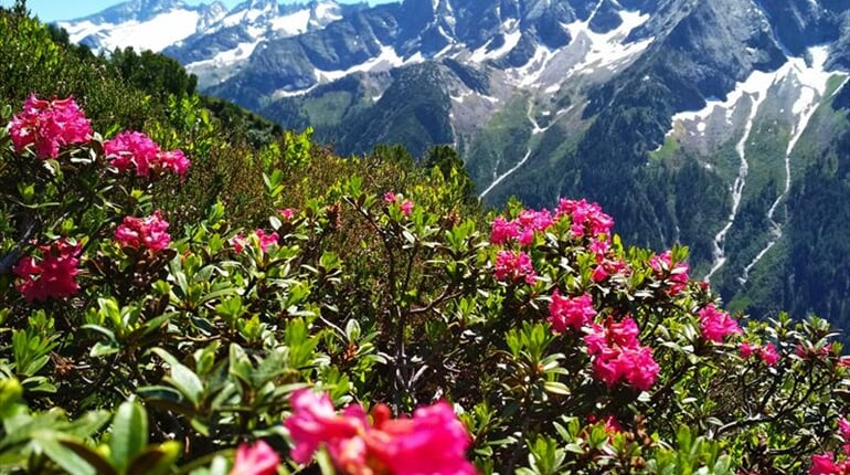 Foto - Zillertal - Zillertal - magická síla hor a vody