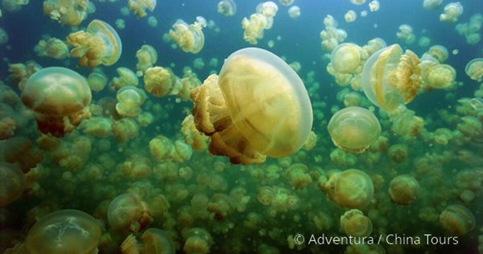 Nežahavé medúzy v Jellyfish Lake
