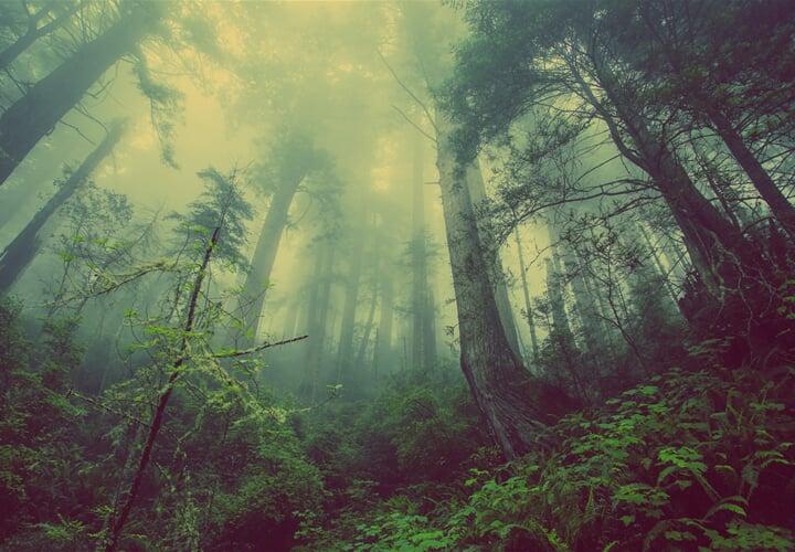Odhalte tajemství českých pralesů