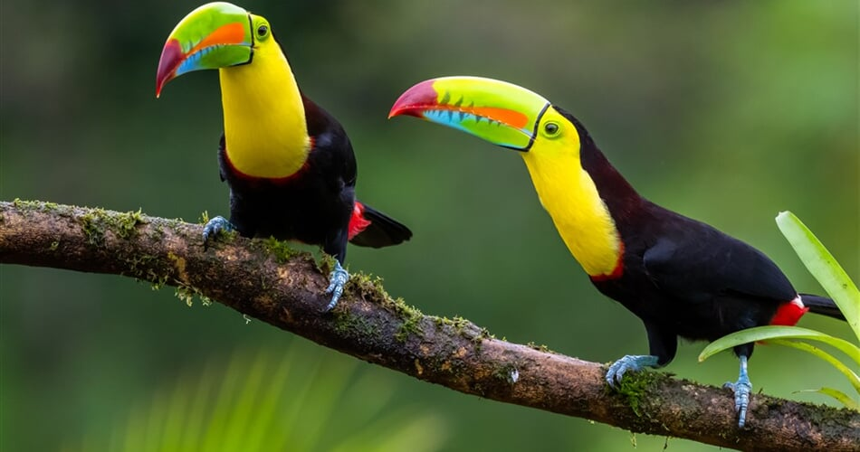 Kostarika_tukan_shutterstock_1675391407