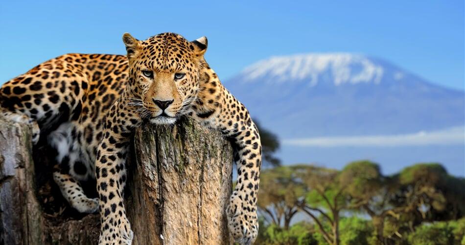 Kilimanjaro_kocka_shutterstock_201579008