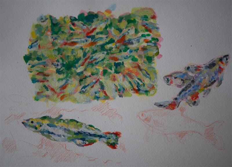 Aquarium fish - watercolour, gouache, coloured pencil