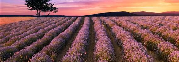 Za levandulí nejen do Provence