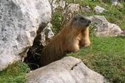 Marmotta Ph Apt Dolomiti Paganella