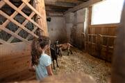 PontedilegnoTonale AdamelloCard fattoria bambini
