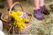 PontedilegnoTonale AdamelloCard fiori