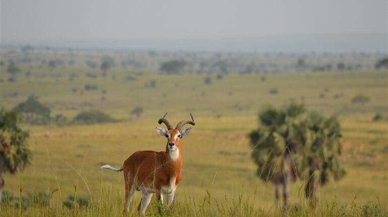 Foto - Okruh Ugandou a horské gorily