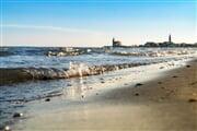 marespiagge conchiglie