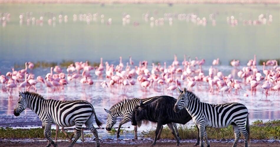 Foto - Keňa - volání divočiny