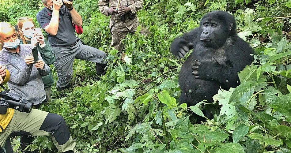 Gorila-s-klienty_web_IMG_9828