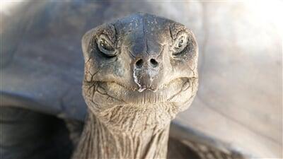 Obří želvy na ostrovech Seychely