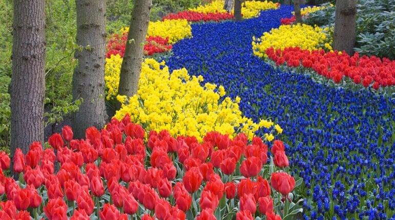 Poznávací zájezd Holandsko Květinové korzo