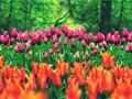 Květinové slavnosti
