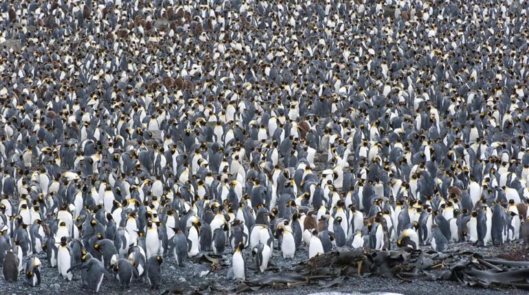 Foto - Antarktida - tučňáci císařští