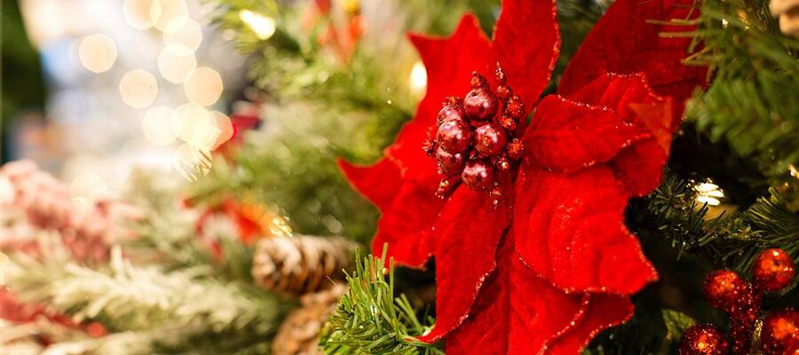 Vánoce s relaxací a koupáním