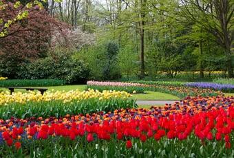 blossom, trees, color