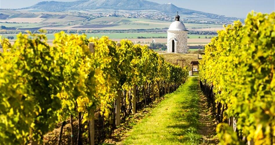 Foto - Pěšky mezi moravskými vinicemi